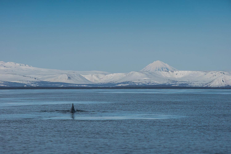 Maewan : de l'Alaska au Japon
