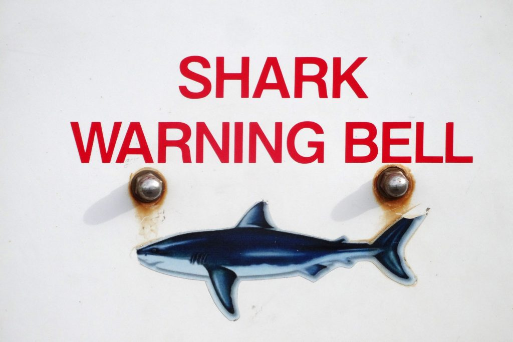 Ah bon l'eau n'est pas trop froide pour les requins ?