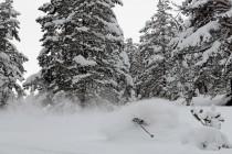 Forêt idéale pour le ski