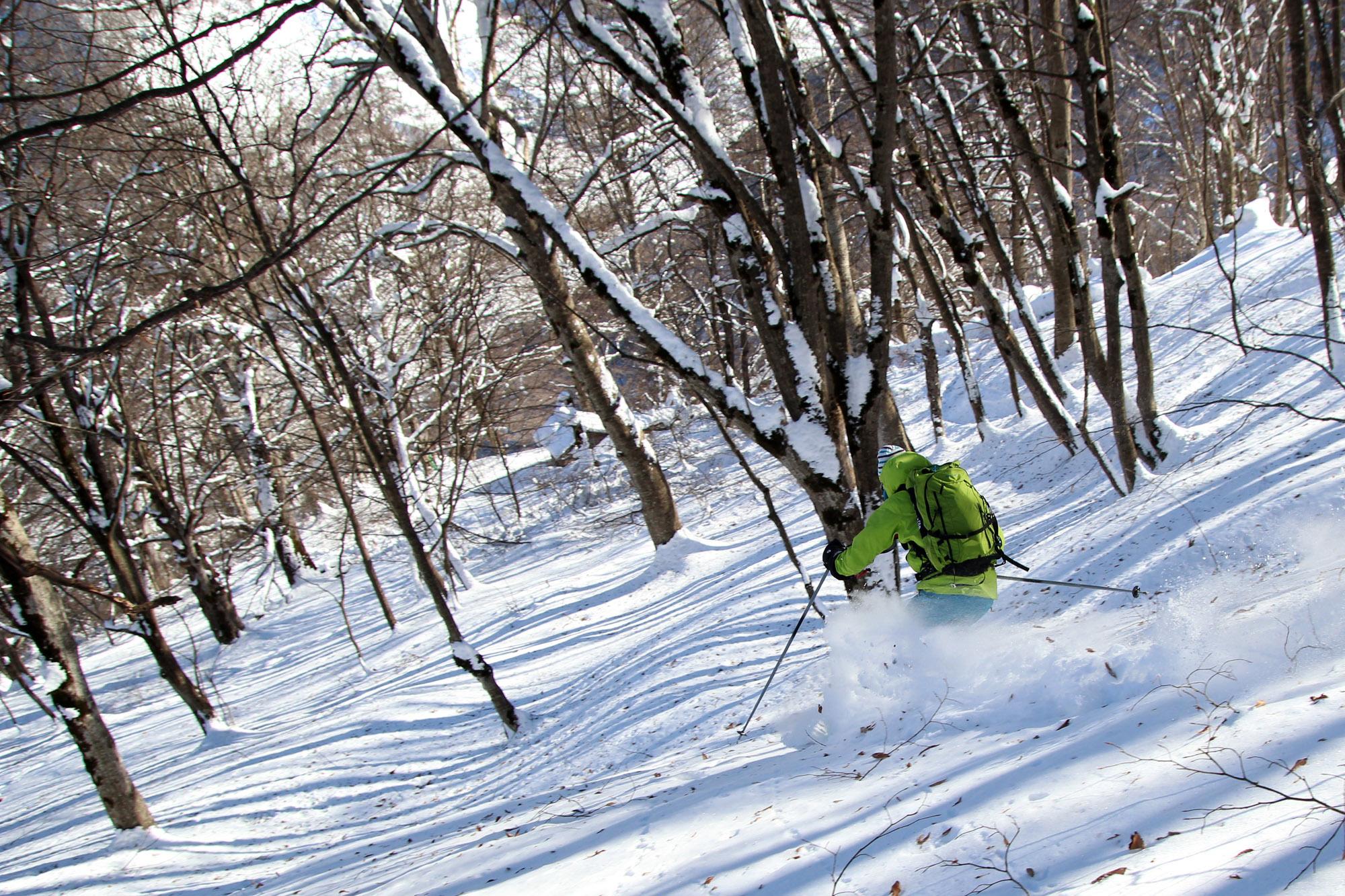 Belle forêt pour le ski !